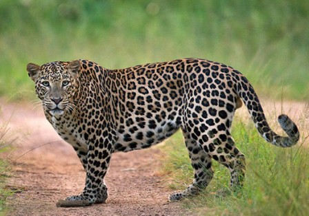 Woman fights off leopard, to save her daughter