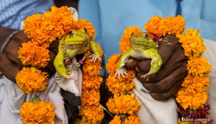 Animal Planet to premiere the first ever documentary film on amphibians of India - 'The Secret Life of Frogs'