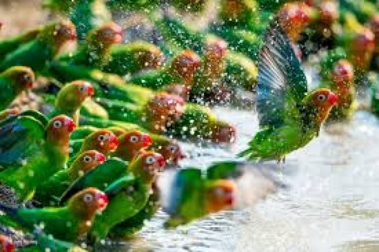 பருவநிலை மாற்றங்களால்  பறவைகளின்  உடலமைப்பில் மாற்றம்ஆய்வில் தகவல்