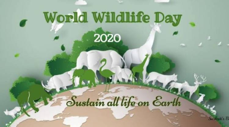 World Wildlife Day to celebrate and raise Awareness of the World Wild Animals and plants