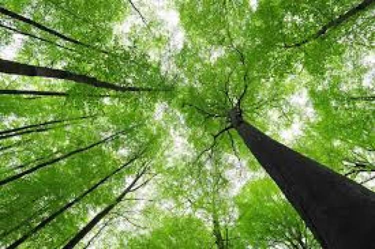 """2020 Theme for the International Day of Forests is """"Forests and Biodiversity"""""""